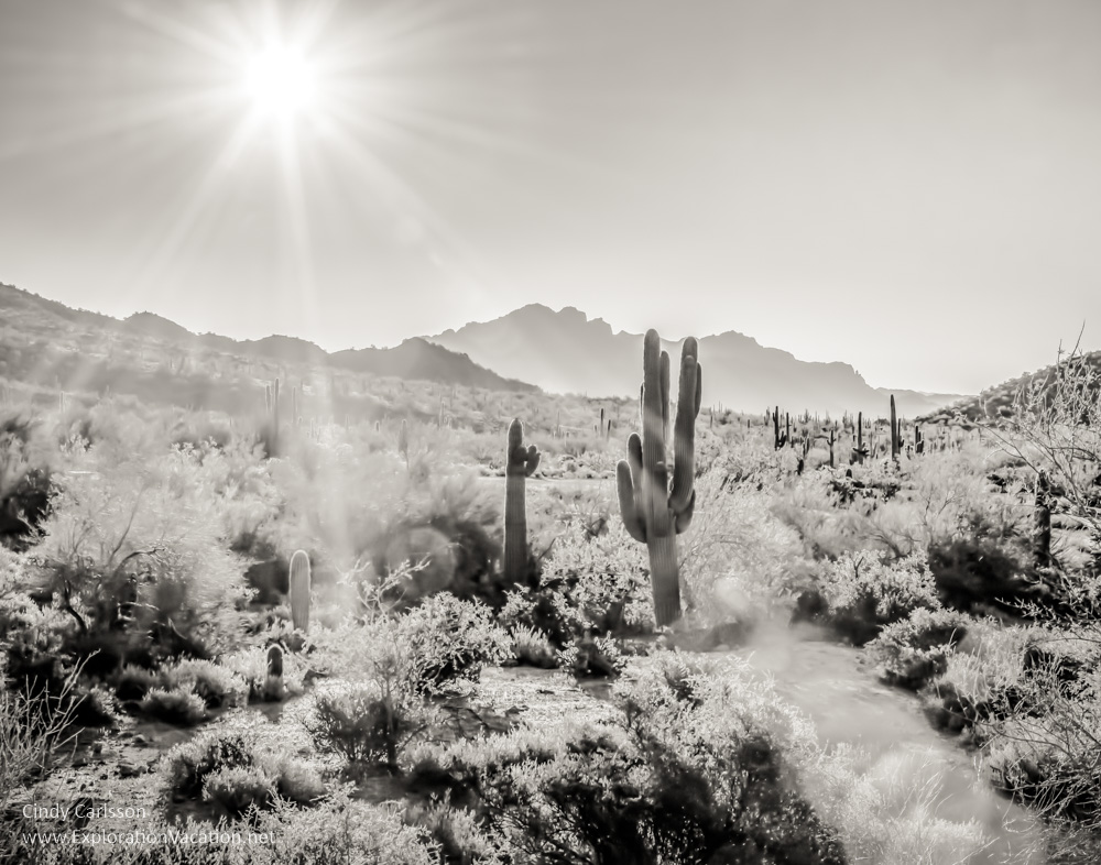 Under the Sonoran Sun St Paul Camera Club - Cindy Carlsson