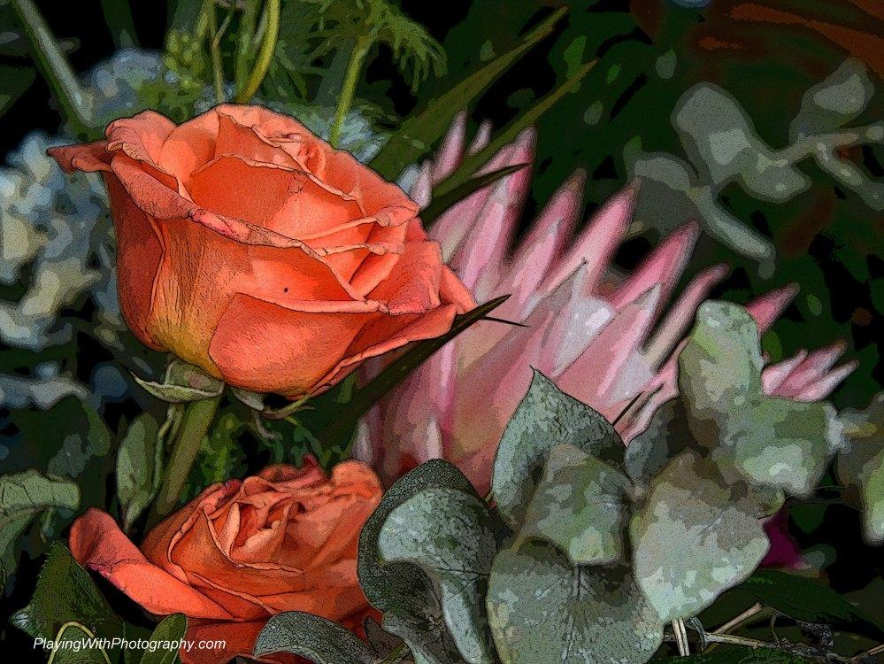 20140523-DSC_6557 posterized rose