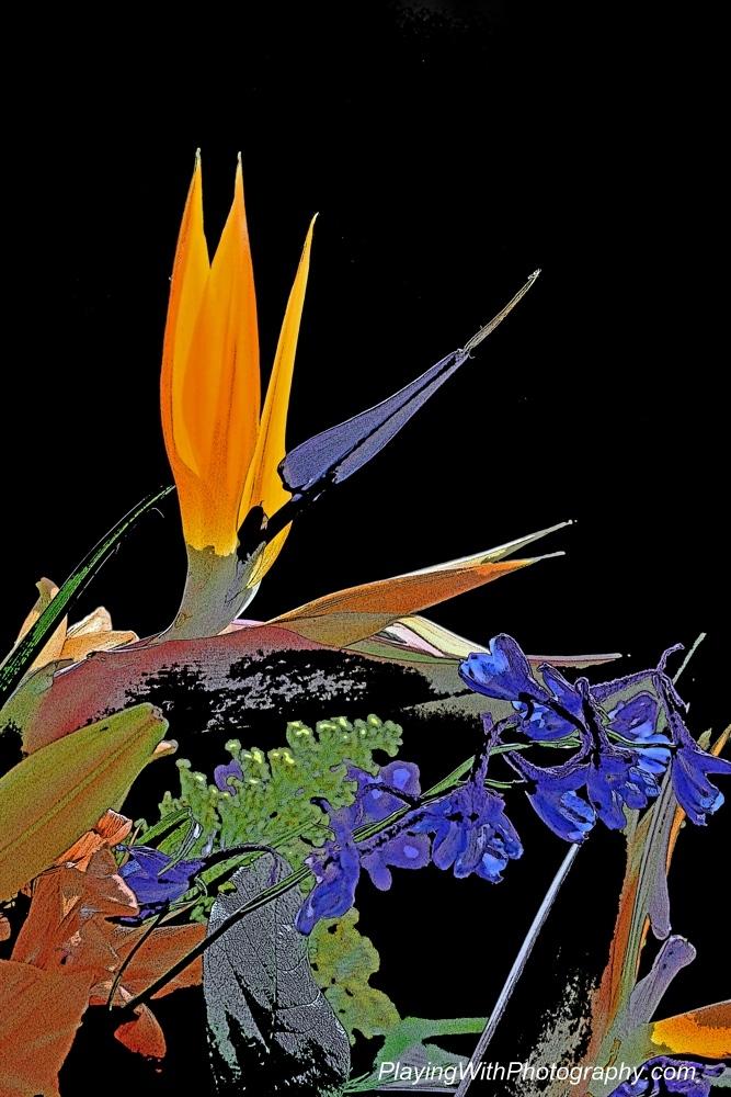 20140524-DSC_6713 posterized bird of paradise