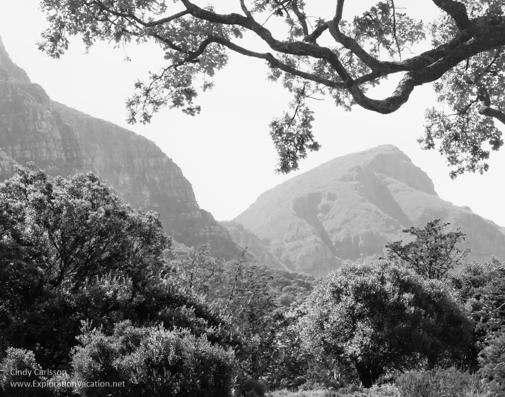 kirstenbosch Garden Cape Town South Africa -ExplorationVacaion