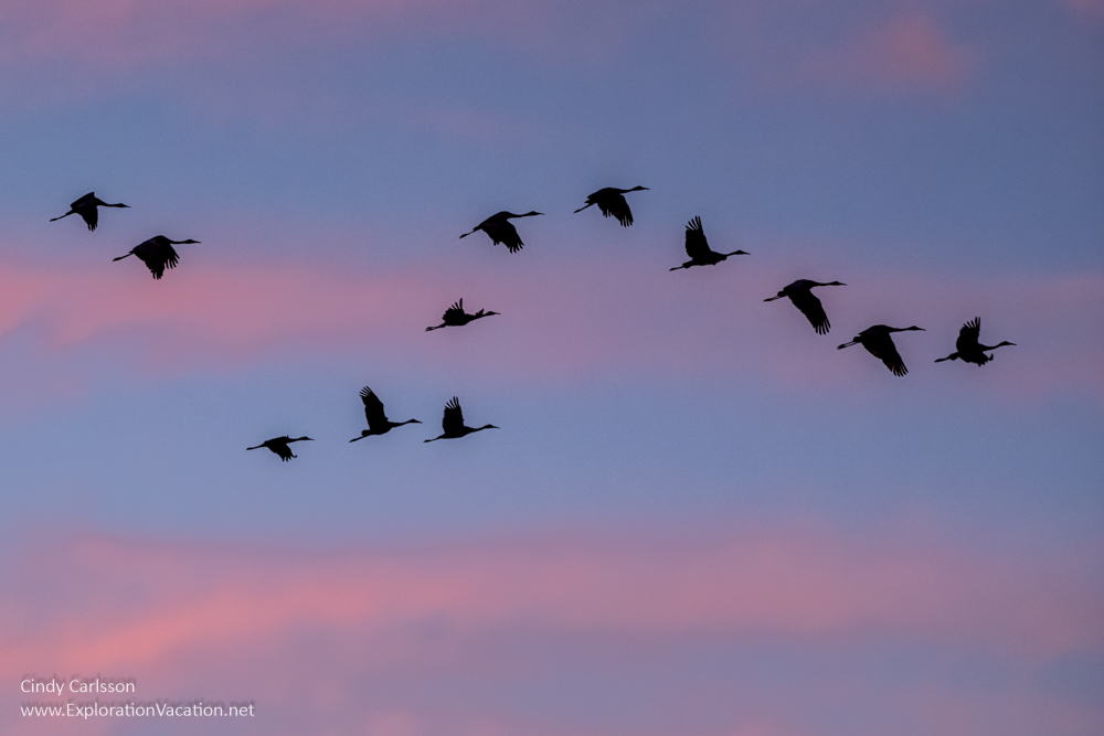 Sandhill crane skies - www.playingwithphotography.com