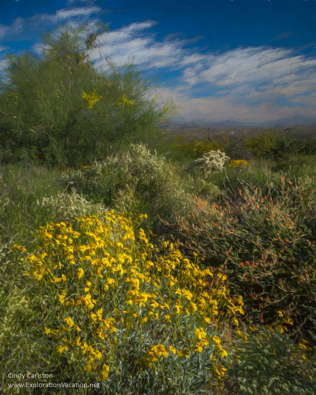 Arizona wildflowers - www.playingwithphotography.com